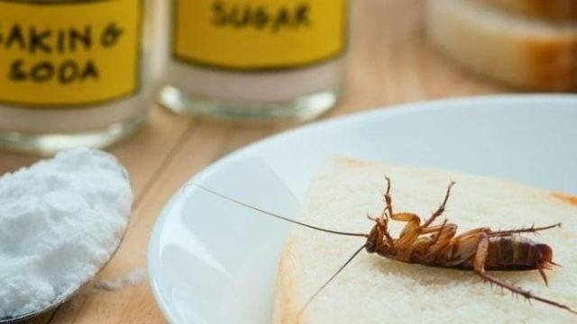 ways to get rid of roaches in an apartment
